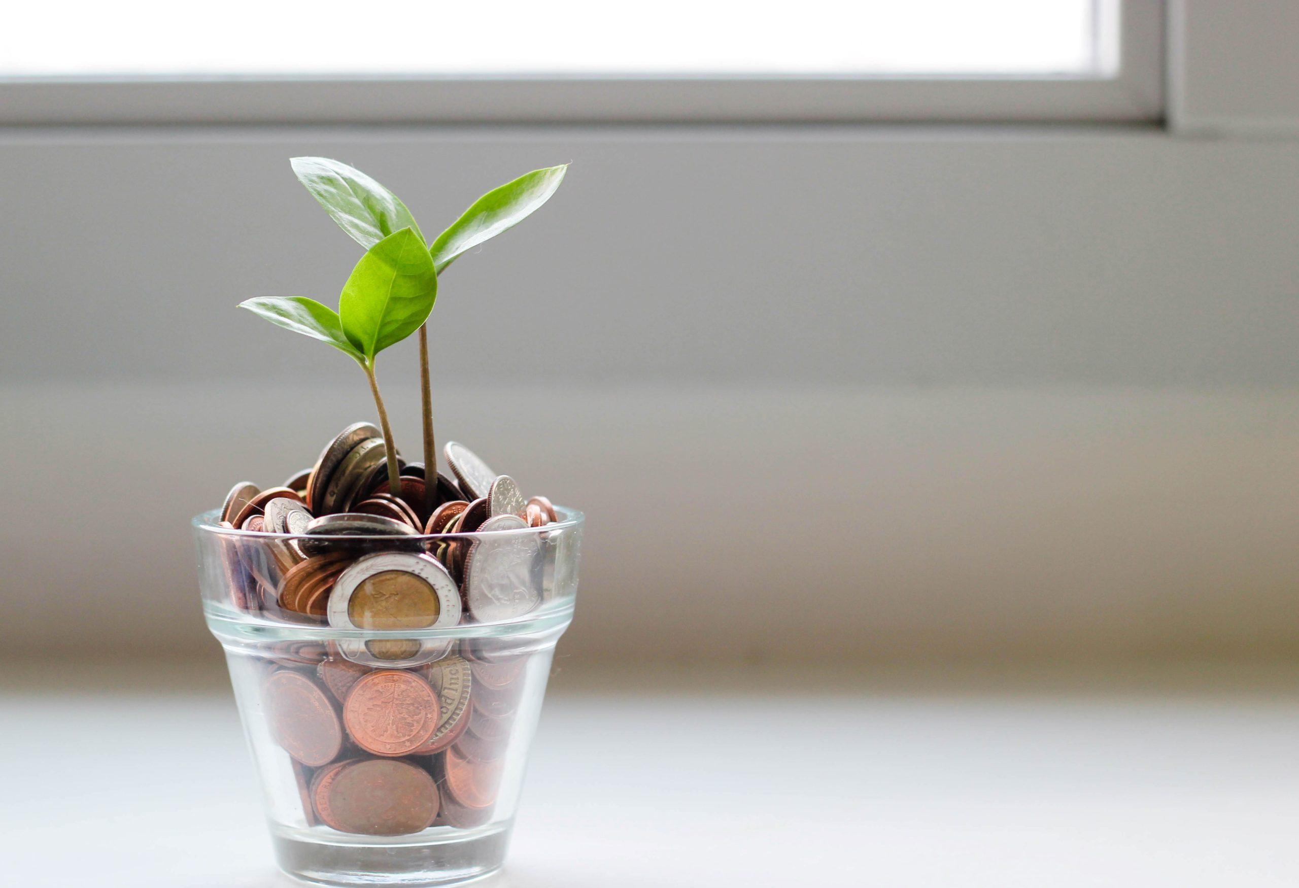 Nachhaltig Geld anlegen und Nachhaltigkeit: Hier gibt's alle Infos dazu!